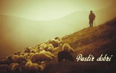 pastir001